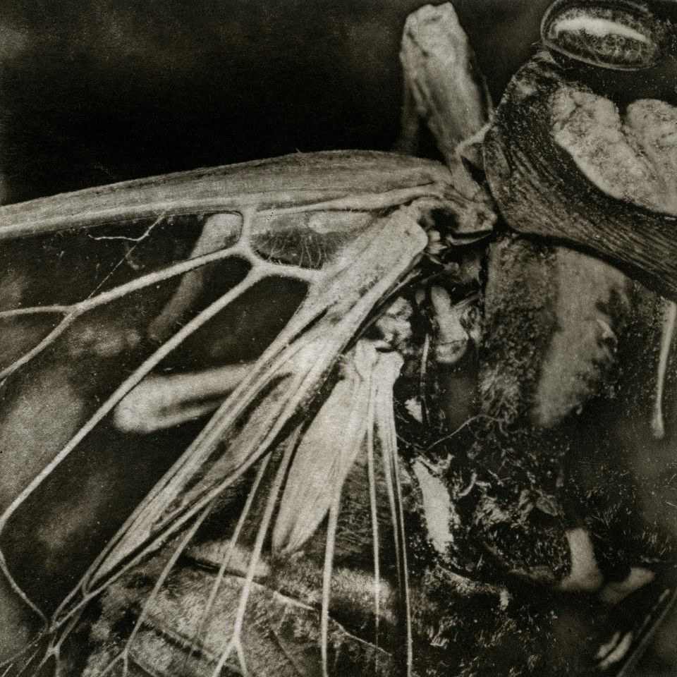 Angela Wells - Copperplate photogravure
