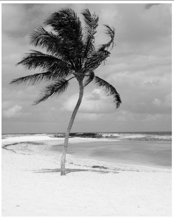 Carolyn Rogers - Platinum/palladium print