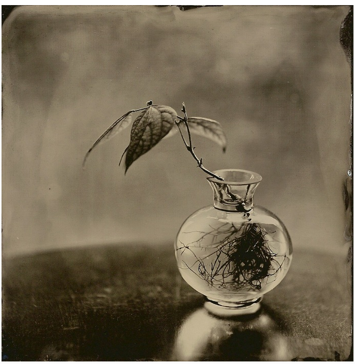 Angie Brockey - Wet Plate Collodion Tintype