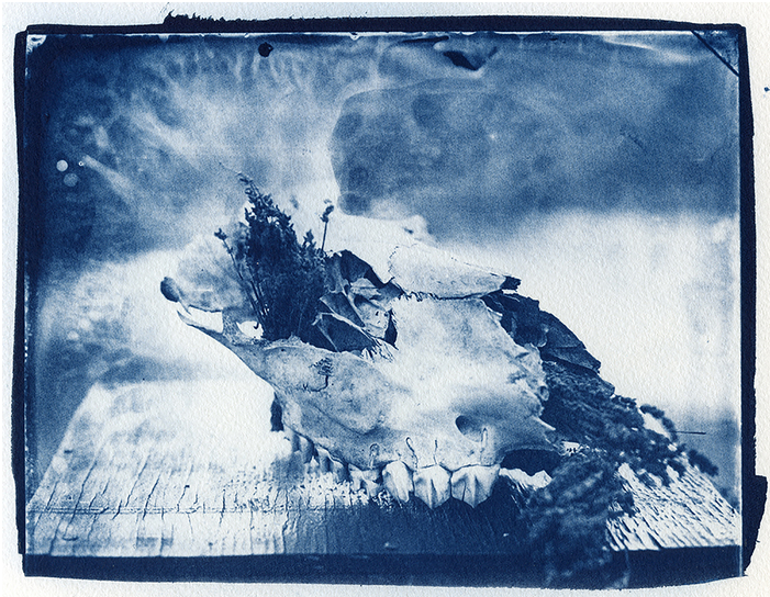 Angelica Petryshyn - Cyanotype from Glass Negative