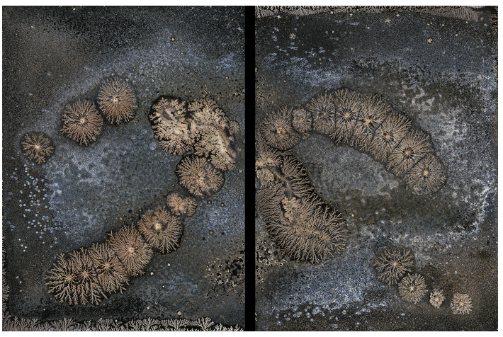 Michael Koerner - Chemigram on Collodion Emulsion