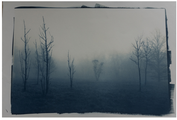 Laura Fontaine - Cyanotype
