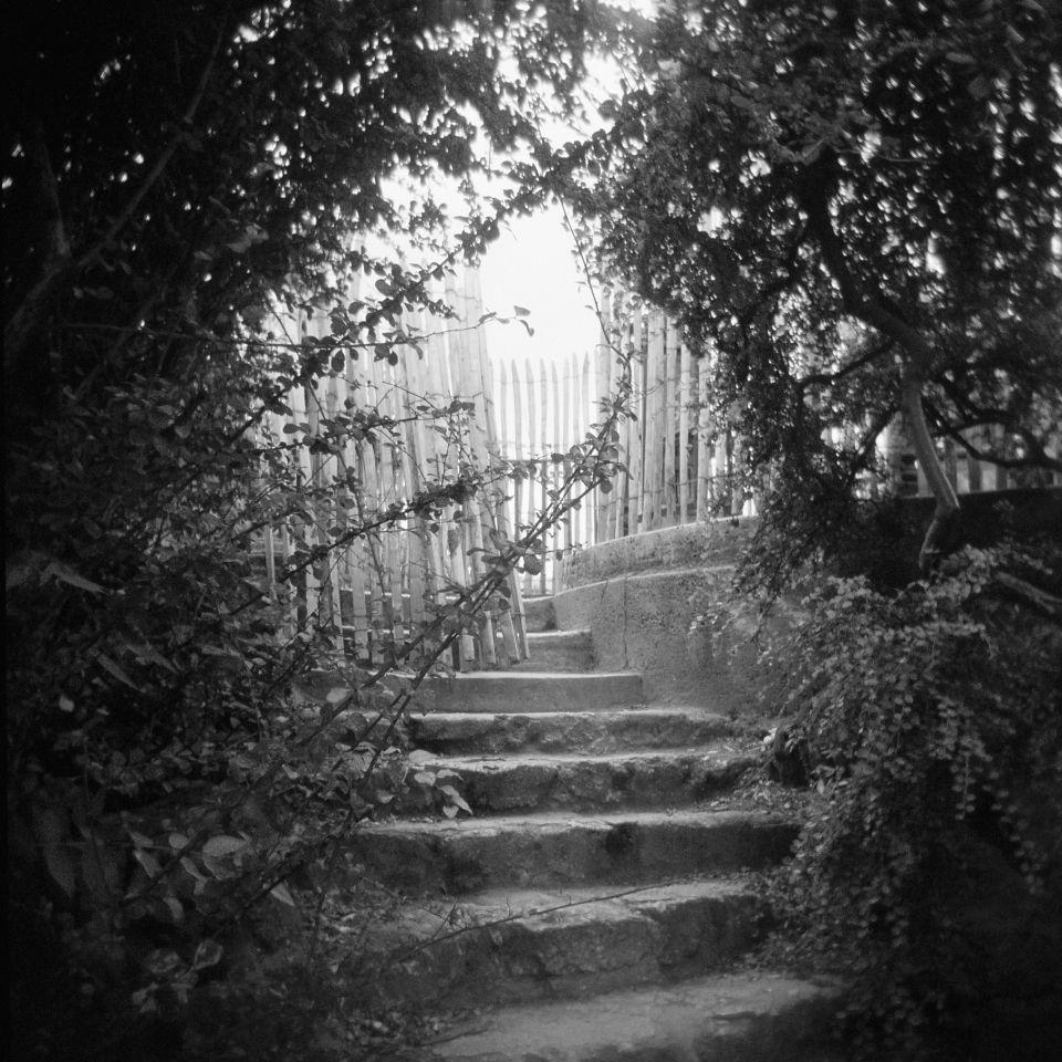 DeAnna Foran - Jardin des Plantes, Vintage Diana