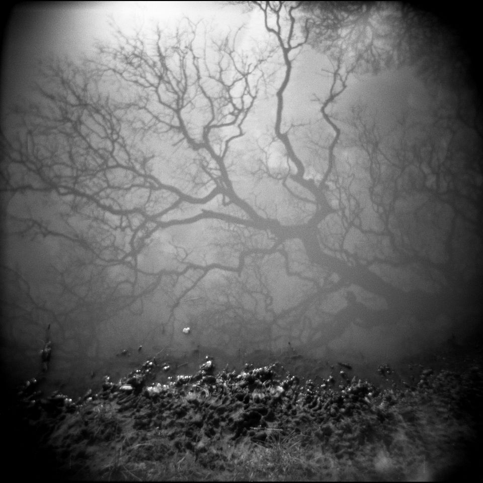 J.M. Golding - Evidence of Another World, Holga 120N