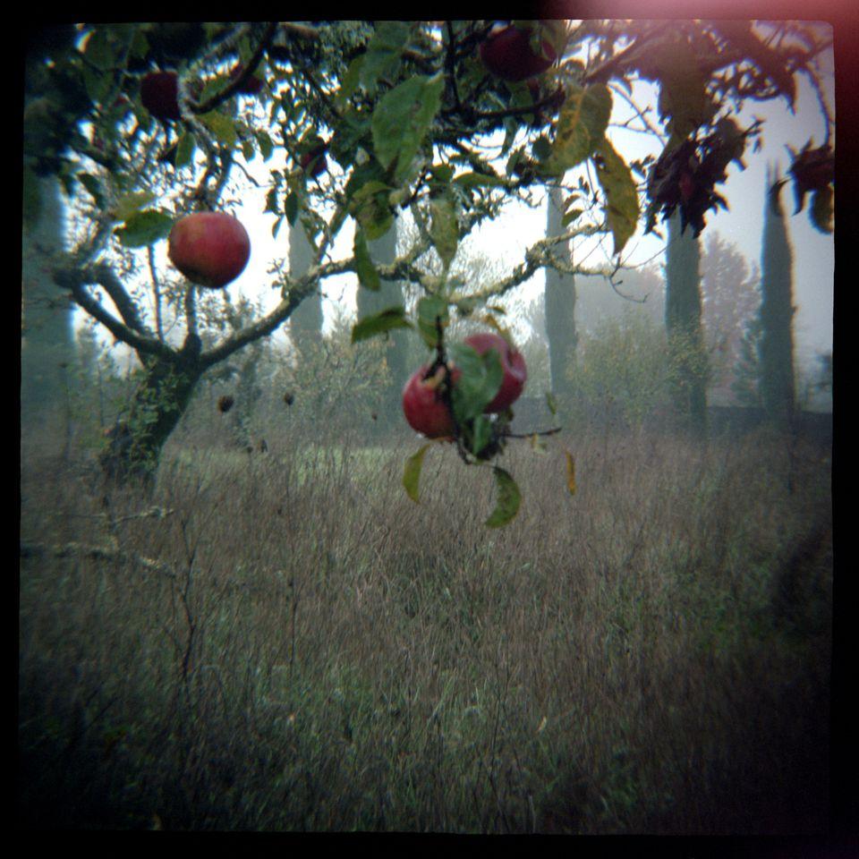 Daniel Grant - Orchard Flare, Vintage Diana