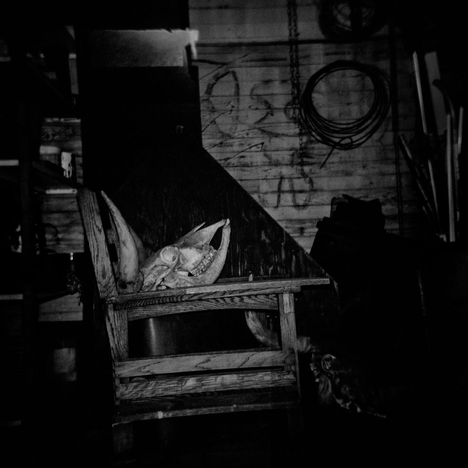 Rachel Liu - Trespassed, Holga