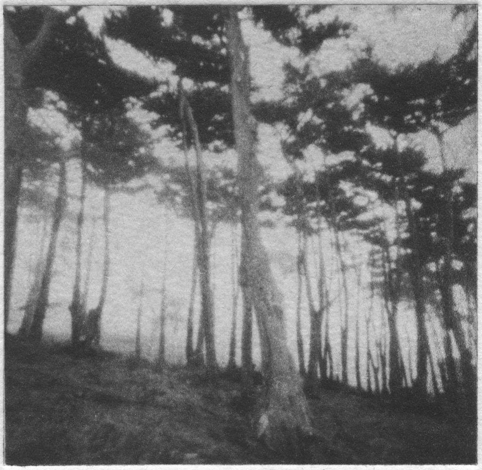 Erin Malone - Foggy Woods, Pinhole
