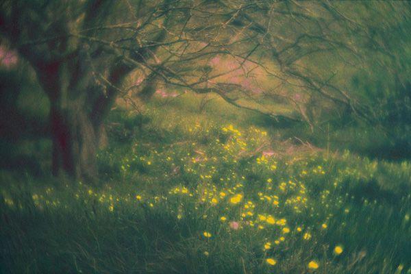 David Aimone<br/>www.aimonephoto.com
