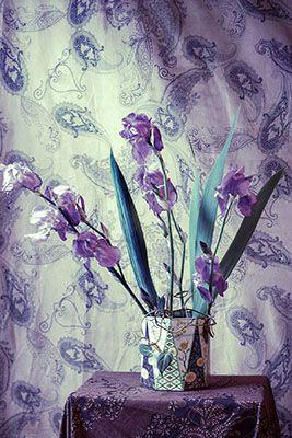 Leslie Hanes<br/>www.lesliehanes.com.