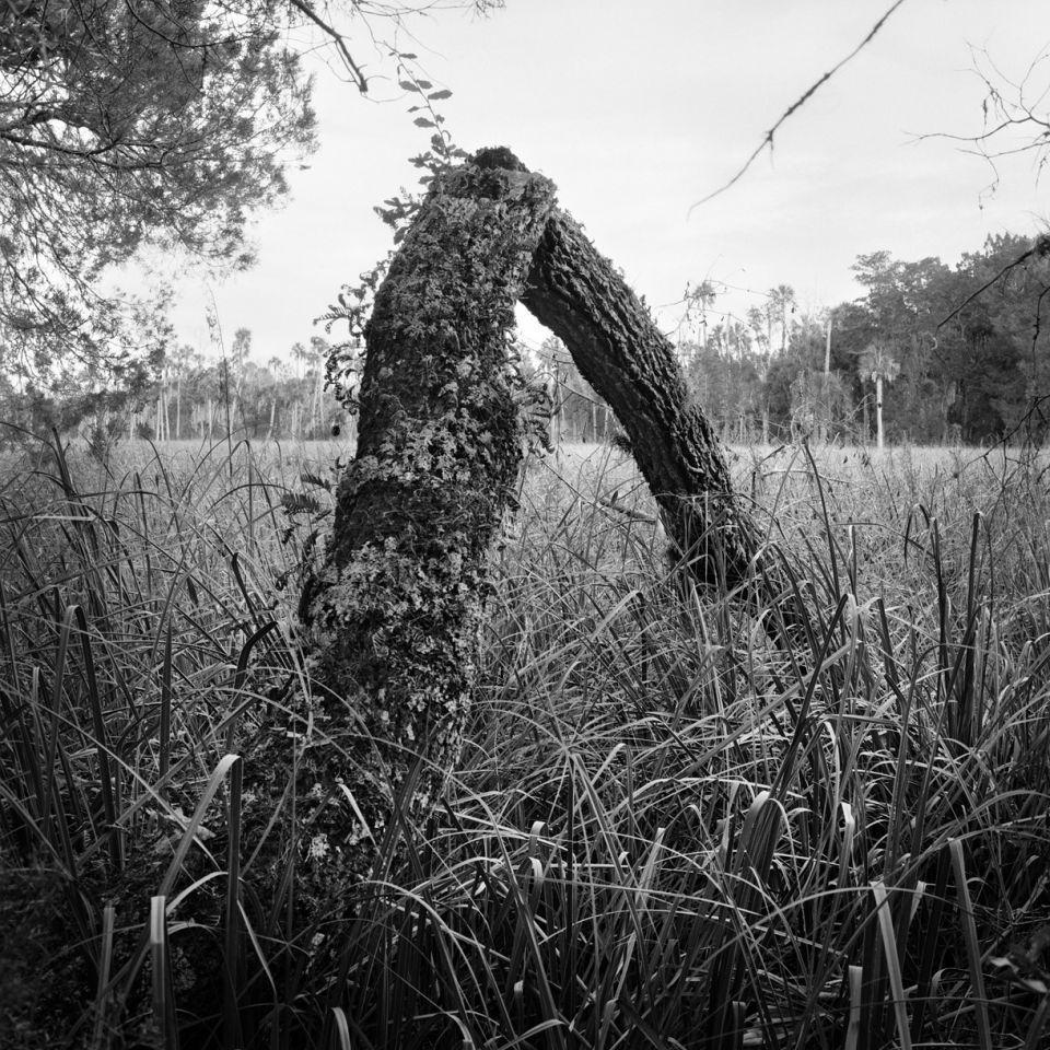 Benjamin Dimmitt - Collapsed Oak & Sawgrass Prairie
