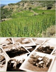 Field of Grass / Photographs