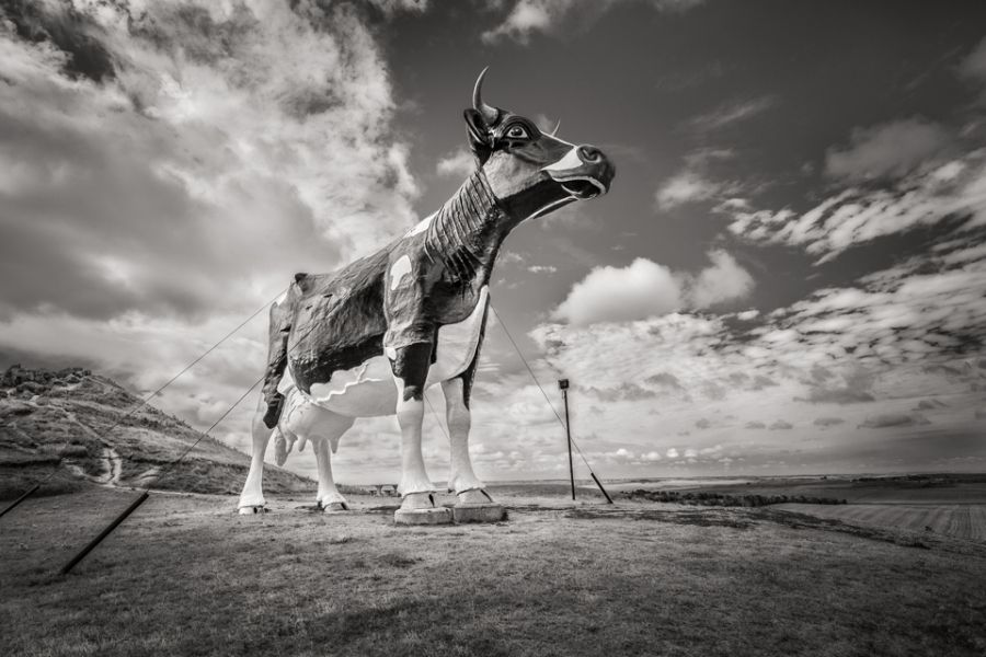 World's Largest Holstein Cow, New Salem, North Dakota