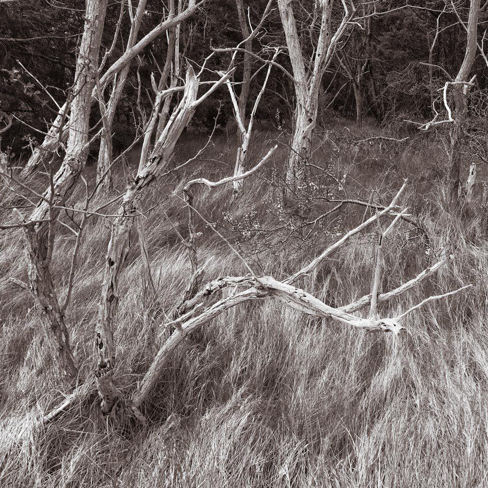 Trees and Grass I, Wellfleet, Massachusetts