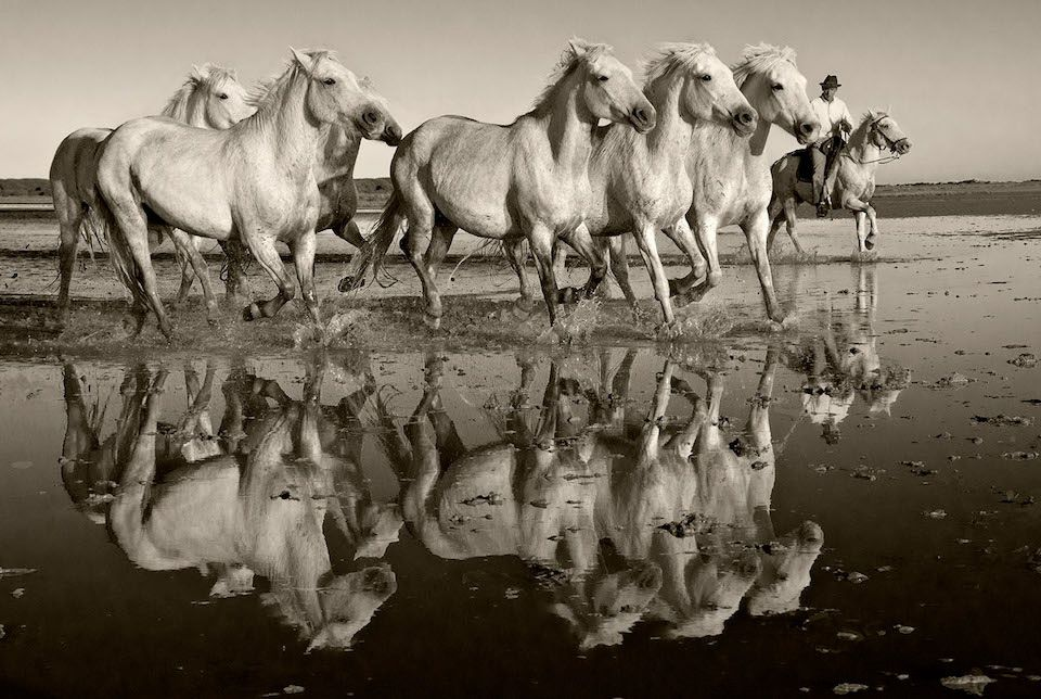 Sarah Corbin - Crin Blanc (White Mane): Horses of the Camargue, December 2016