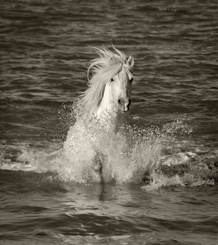 Single Horse Splash