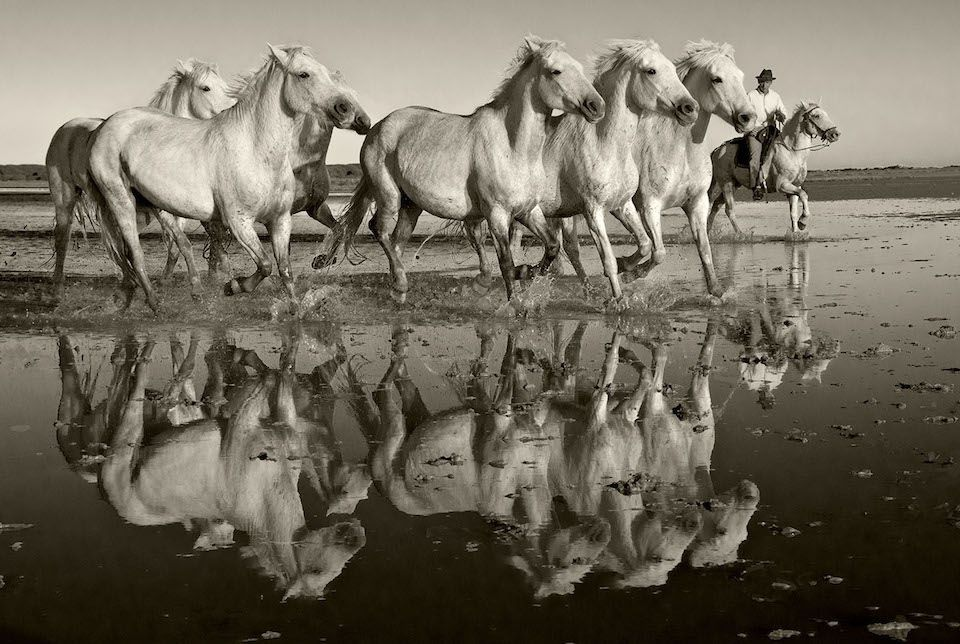 Reflection of Herd